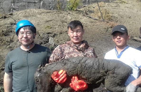 Ученые нашли ископаемого жеребенка