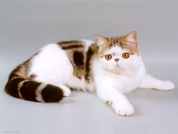 10. Экзот животные, коты