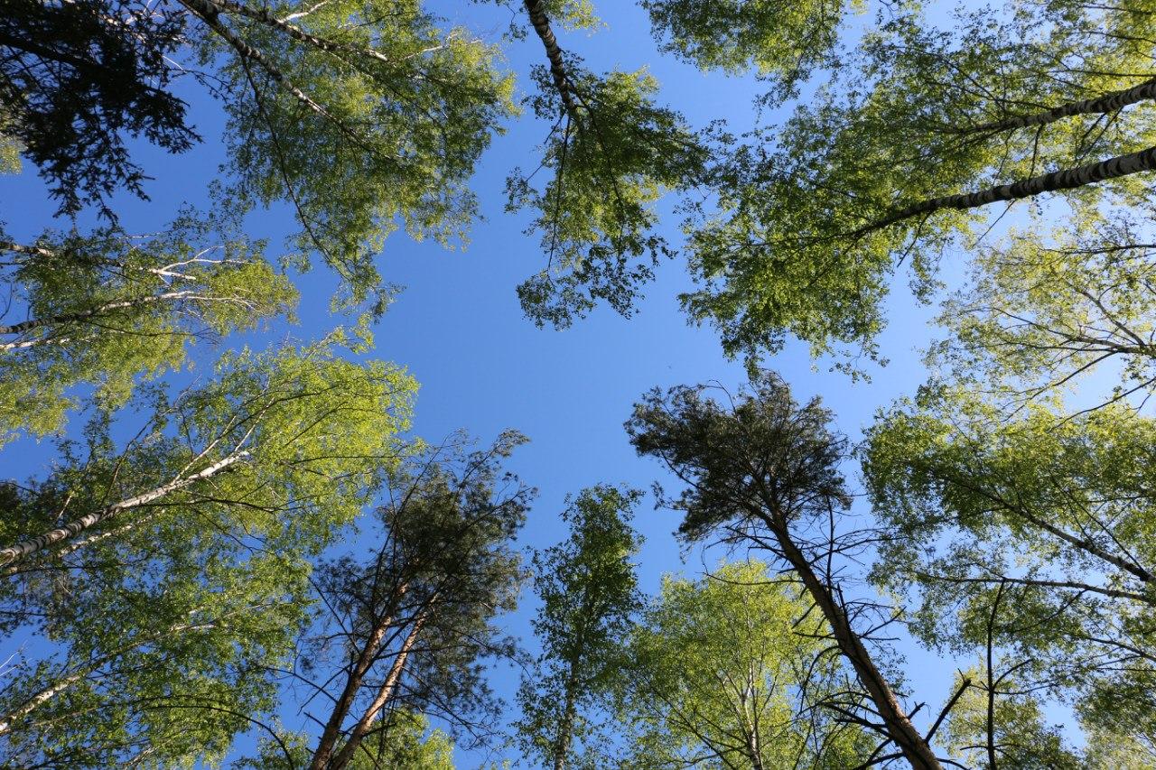 Весеннее настроение в лесу
