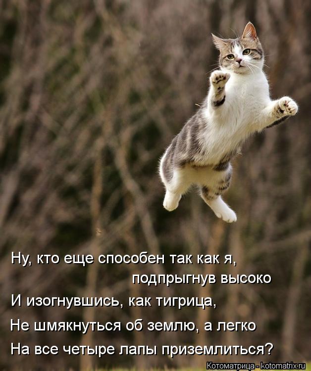 Котоматрица: Ну, кто еще способен так как я,  подпрыгнув высоко И изогнувшись, как тигрица, Не шмякнуться об землю, а легко На все четыре лапы приземлиться