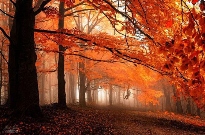 Волшебный мир Карпат: красивые фотографии осеннего леса