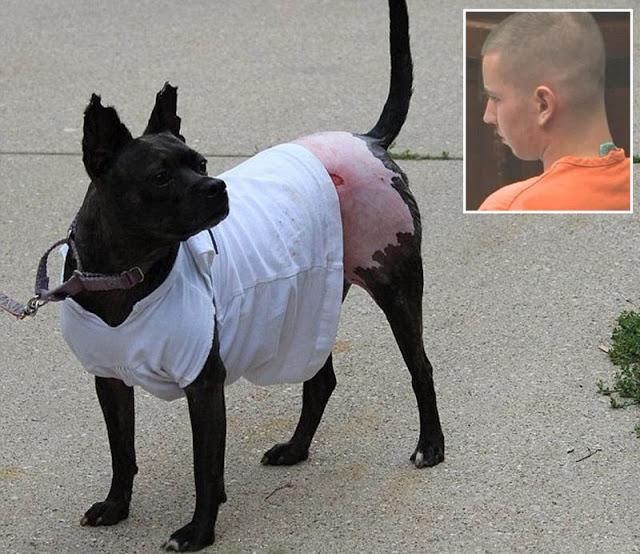 Обгоревшую собаку спасли при помощи кожи свиньи