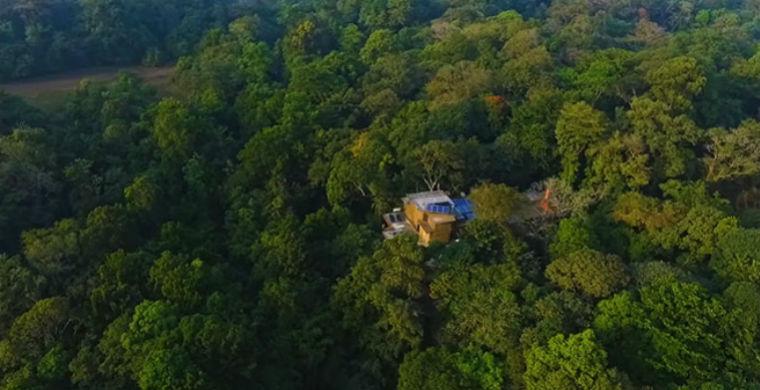 СМИ рассказали о семейной паре, которая вырастила собственный тропический лес