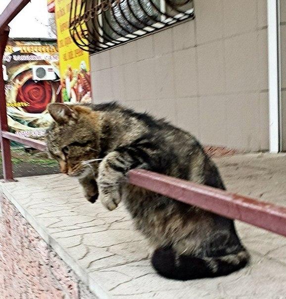 У котов тоже бывают тяжелые дни