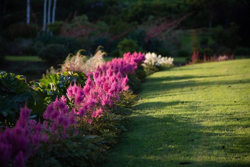 mapleglen11 Восхитительный сад Maple Glen в Новой Зеландии