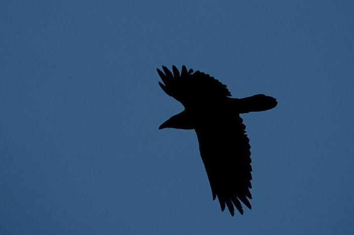Природа Юкона в фотографиях Nicolas Dory
