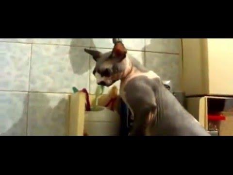 Испытали шок, когда увидели, как наш кот чистит зубы!