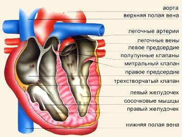 Загадки Сердца