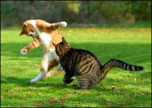Фото как дерутся животные