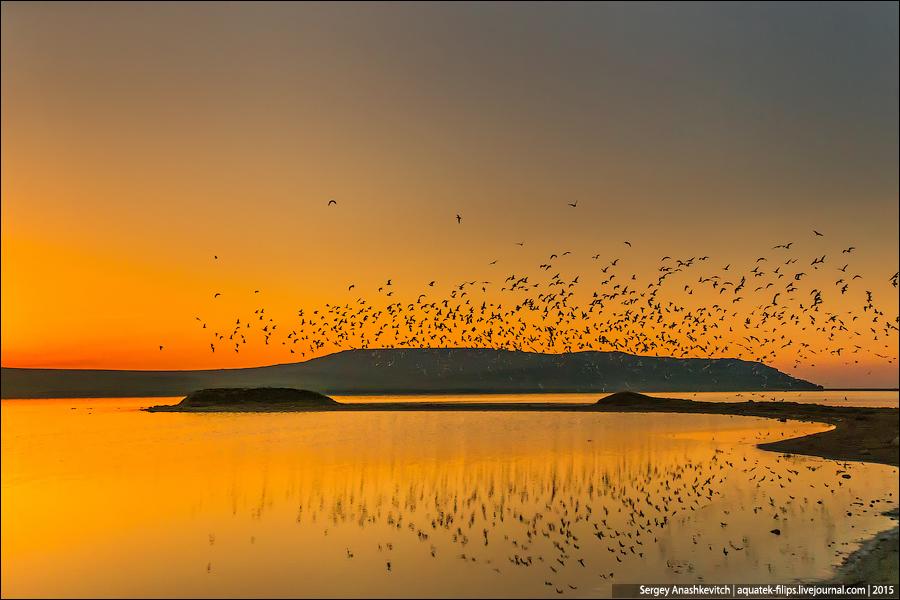 Птицы как люди