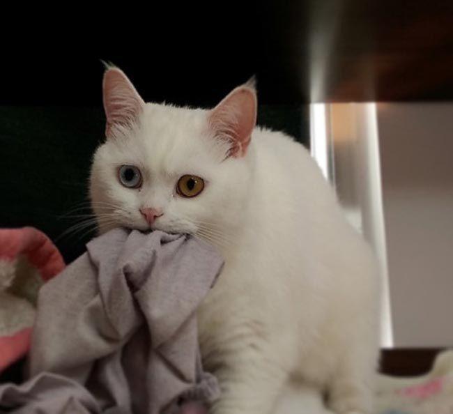 вопросы своим кошкам, задать вопросы кошкам, хозяева задают вопросы своим кошкам, владельцы вопросы своим котам