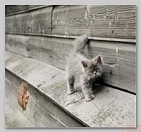 Кошки и Котята 81