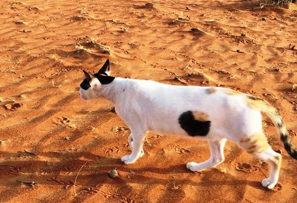 Фотография «дырявого» кота покорила интернет