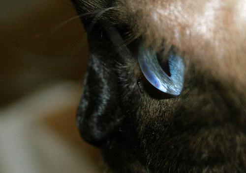 Глаза кошек