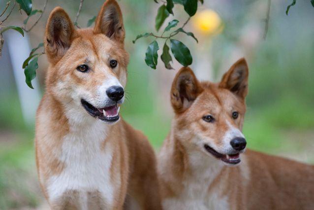 10 симпатичных животных из Австралии