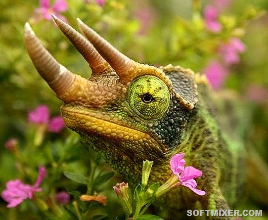 Маленькие драконы нашей планеты