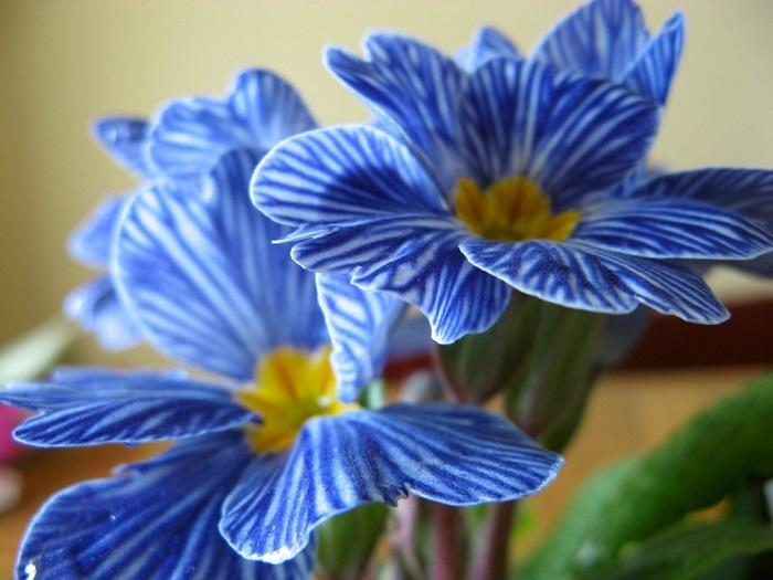 С праздником любви и красоты вас! И в подарок - цветы, на которые можно смотреть бесконечно, так они прекрасны!