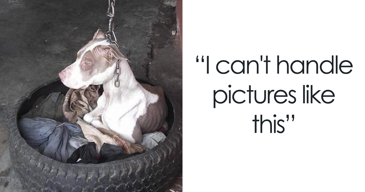 This Dog Was Kept On Such A Short Chain She Couldn't Even Rest Her Head, And Just Look At Her Now