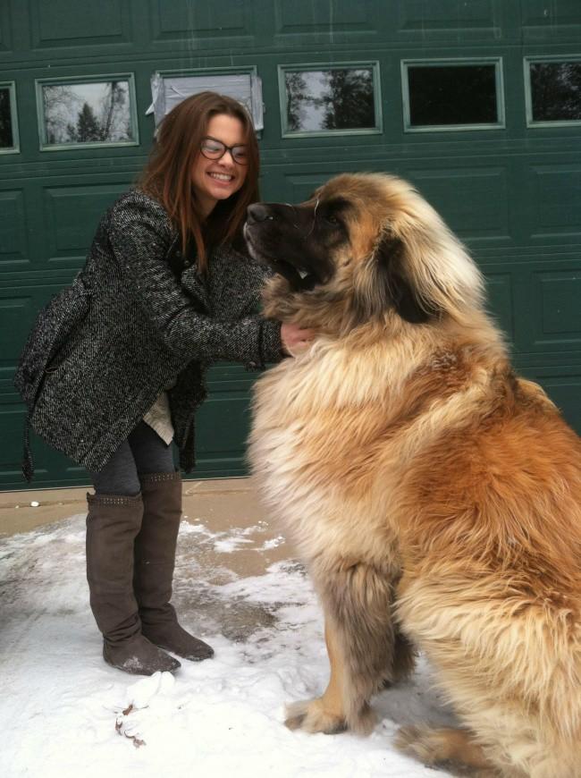 15 собак, которые даже не подозревают о своих размерах