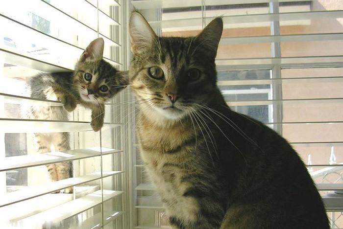 3. С маленькой копией котенок, кошка