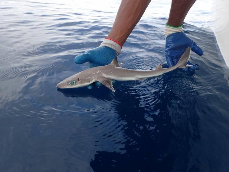 В США нашли новый вид маленьких акул, которые выглядят очень симпатично
