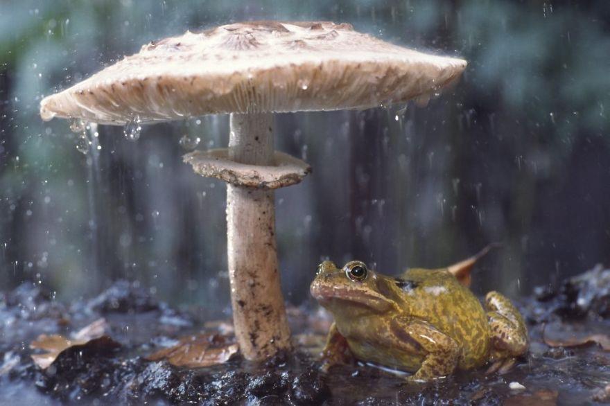 «Эх, заливает» животные, зонтик