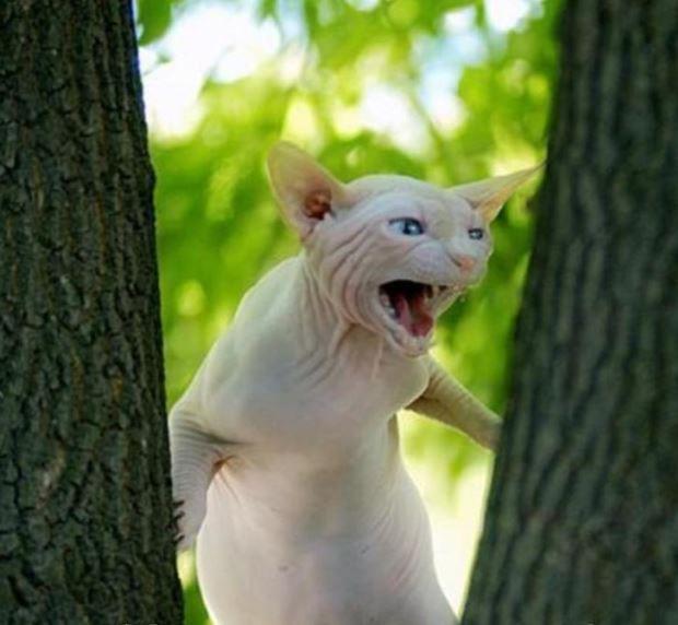 Известные котомемы животные, кошки, прикол, юмор