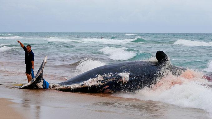От военных достается и китам