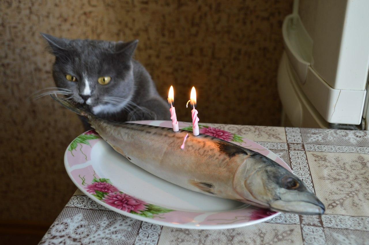 Отметили котячий день рождения