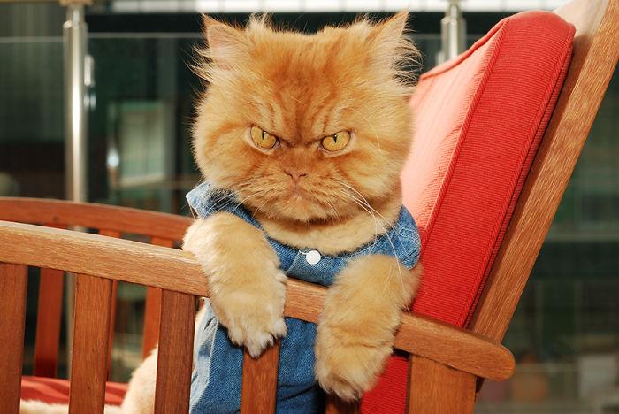 Garfi07 Гарфи, самый сердитый кот в мире
