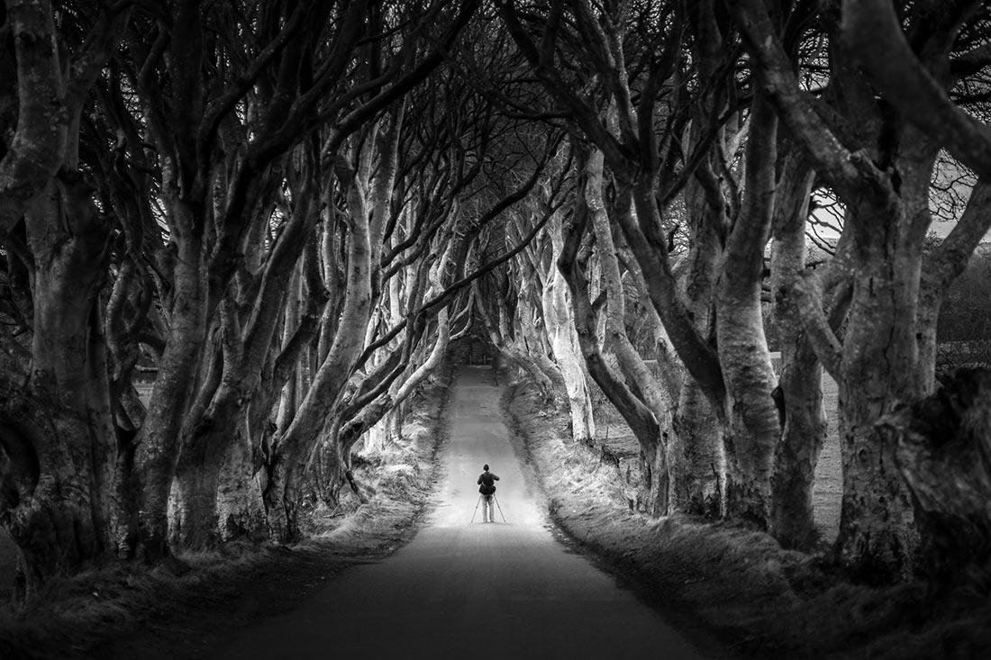 Дарк Хеджес: мистическая буковая аллея в Северной Ирландии
