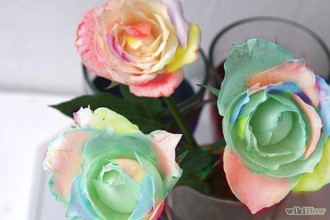 как покрасить белую розу видео