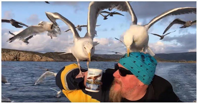 Мужчина напоил стаю чаек чаем