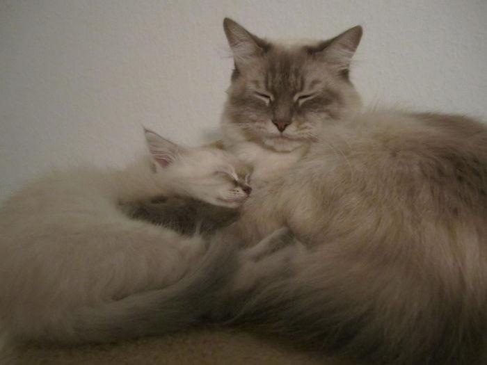 49. Мать и сын котенок, кошка