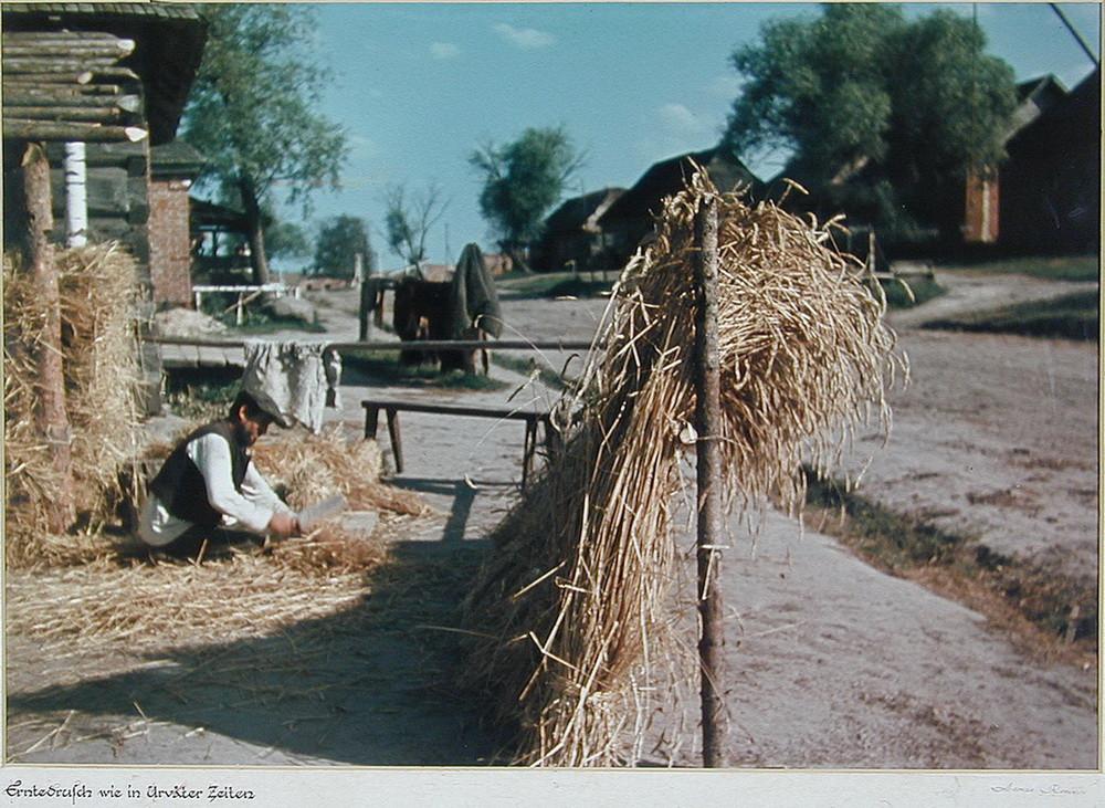Обмолот урожая как в стародавние времена  Калужская область. деревня, фото