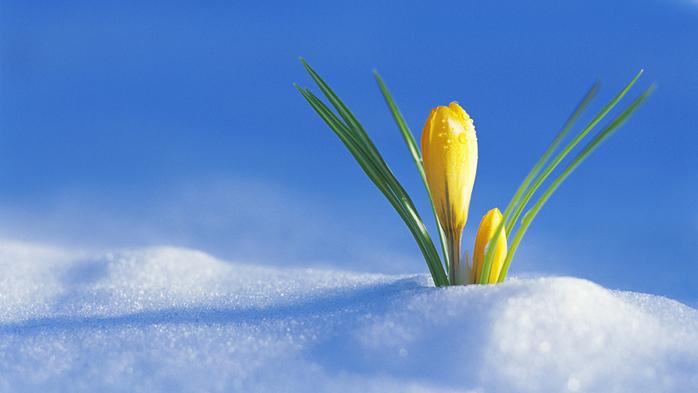 В преддверии весны