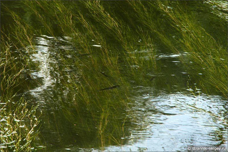 Живая река
