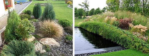 Декоративные злаки: красивый сад круглый год