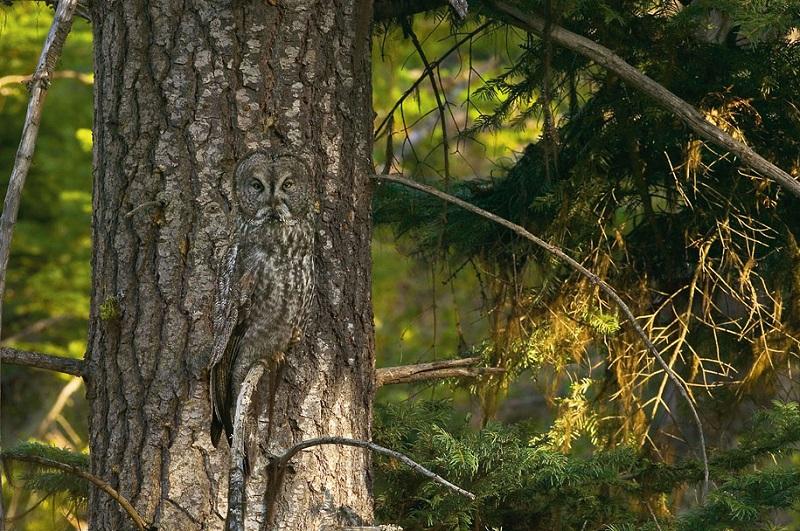 18 глазоубийственных фото из серии «Найди животных». № 15 мы реально рассматривали всей редакцией...