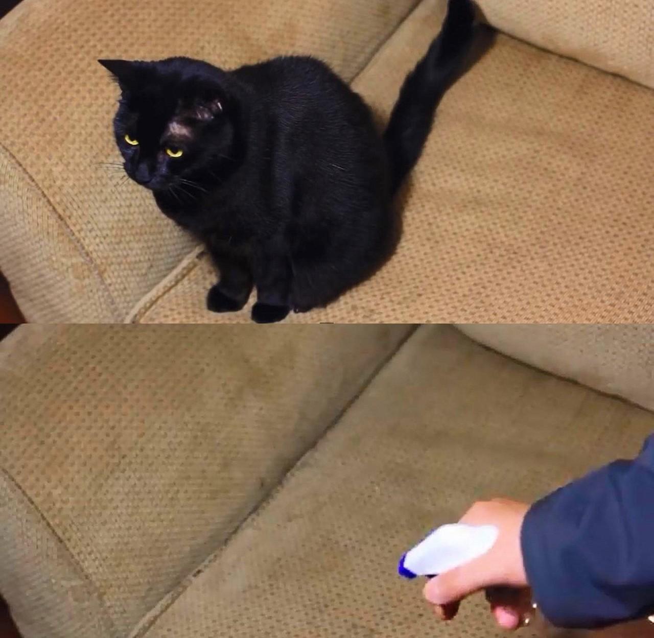 7. Кот больше не будет царапать ваш диван быт, идея, уксус