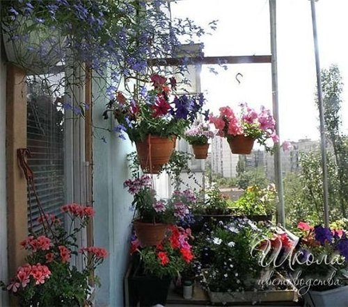 Когда переносить комнатные растения на балкон