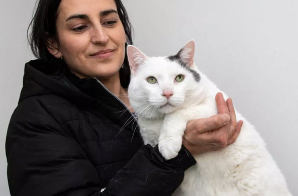 В Великобритании найден самый толстый кот