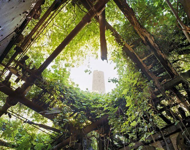 Заброшенный квартал близ Нью-Йорка заброшенное, природа, разрушение, цивилизация