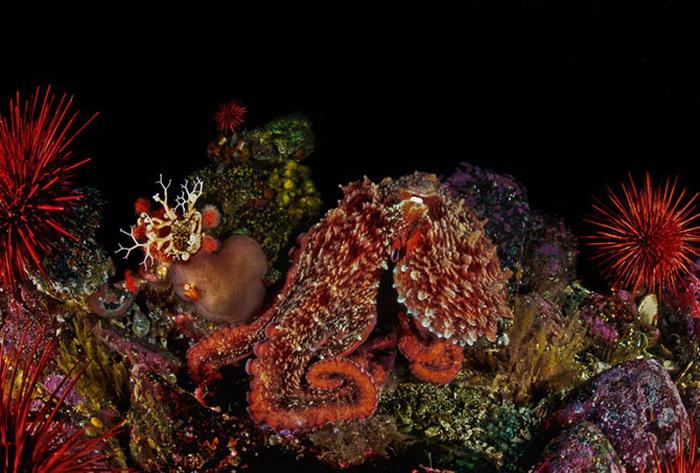 fotos subaquáticas David Hall