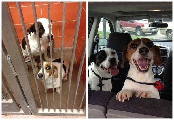 Собаки, которых забрали из приюта - посмотрите на их счастливые мордашки!