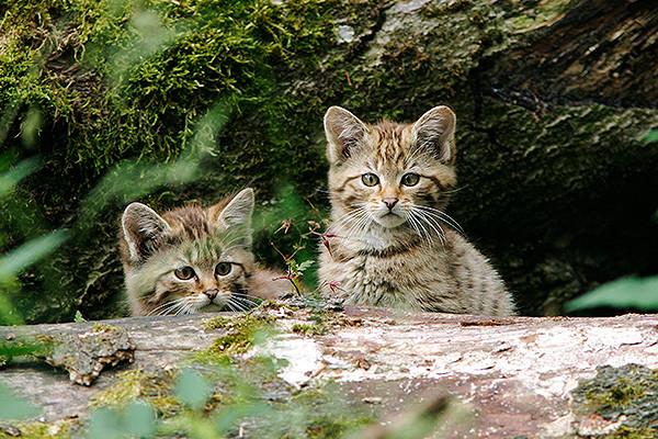Cамые кошачьи места на планете