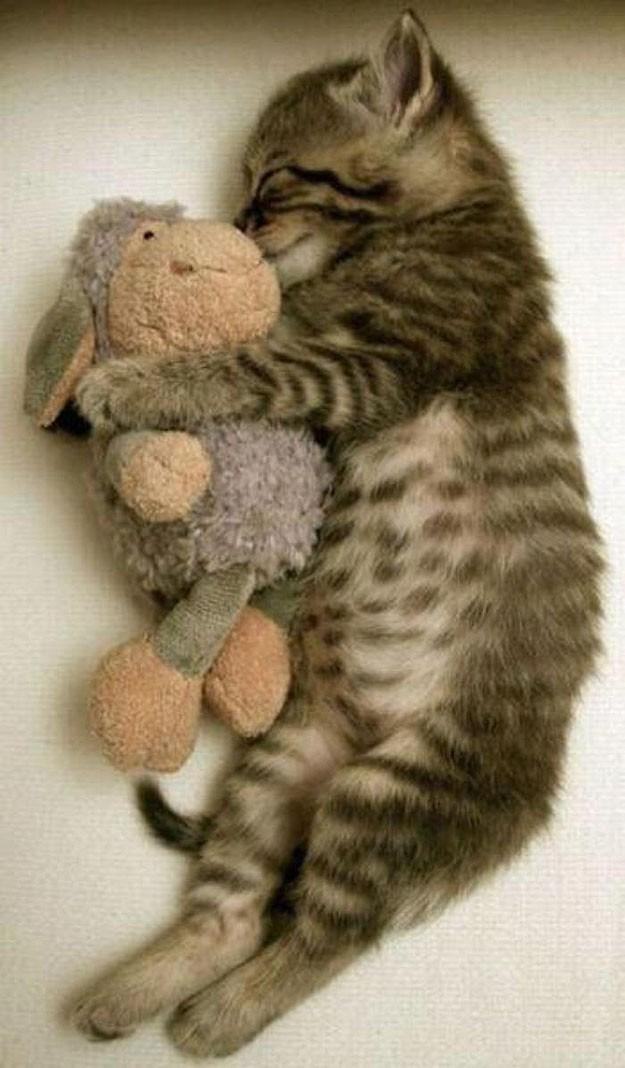 lolcats84 100 лучших фотографий кошек всех времен и народов