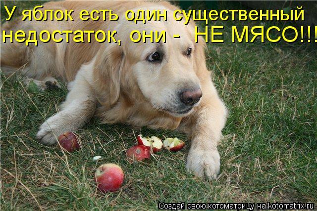 Котоматрица: У яблок есть один существенный недостаток, они -  НЕ МЯСО!!!