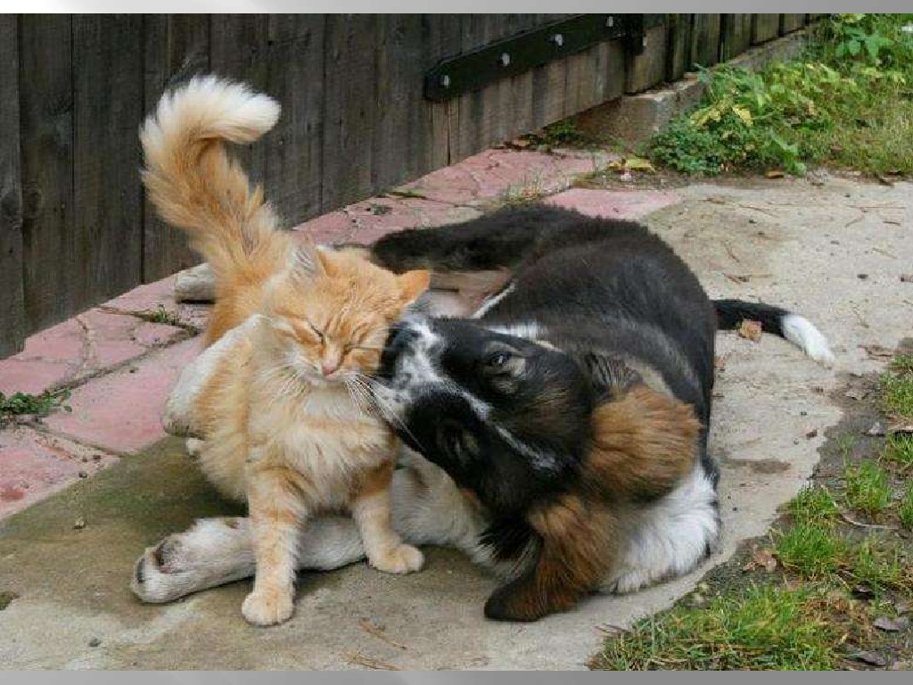 Наши любимые животные на даче