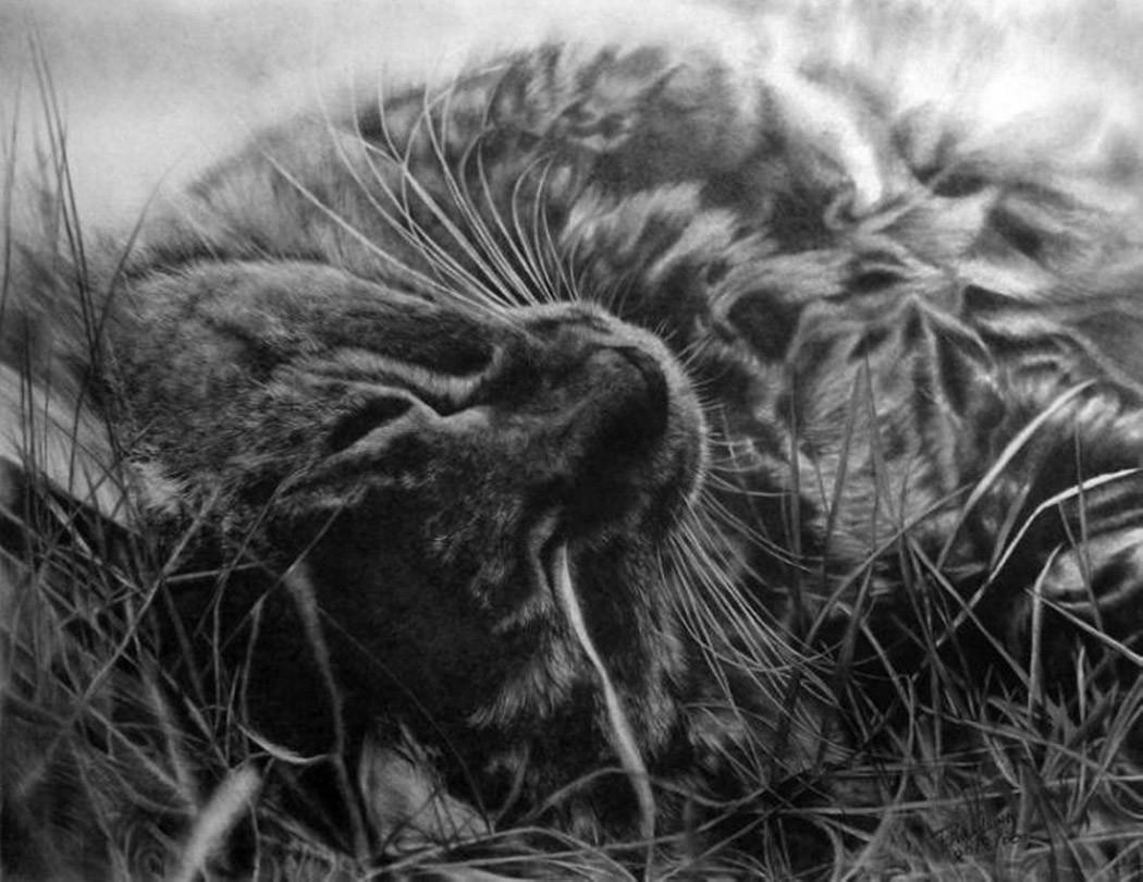 drawncats10 Мастер карандашного наброска — Пол Ланг